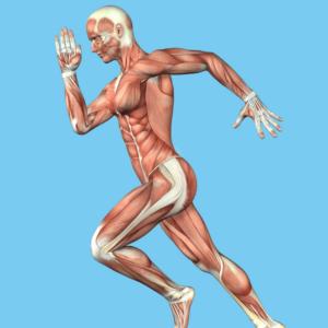 Anatomie Fortbildung